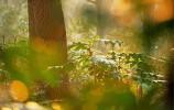 15日济南又来雨 一场春雨一场暖 下周三最高31℃!