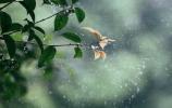 春雨如约而来!济南平均降雨量14.7毫米 平阴洪范雨最大 看看你家附近的雨量如何