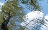 昨天的雨南山下得最大!气温重回2时代 5月27日济南天气凉爽啦