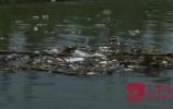 玉符河沿线每天清理外运垃圾10余方!河边游玩请保护环境
