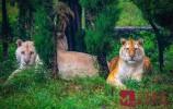 林深见鹿,狂野地带遇虎!3000余只野生动物伴您中秋之旅
