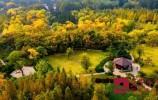 2021年底,济南将新建411个公园100处花漾街区