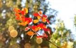 莱芜这里黄栌叶漫山红,最美秋景全看遍!