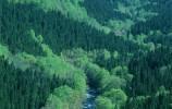 济南推进森林防灭火工作规范化建设 明确涉林单位和个人防火责任