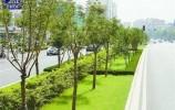 """又""""绿""""又""""花"""":济南今年前10月建绿透绿4166处 山体公园提前竣工"""