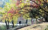 莱芜区红石公园内初冬风景秀美 吸引着许多市民前来游玩