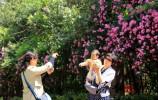 """获得""""国际花园城市金奖""""!济南的城市名片还有这些……"""