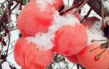 """初雪过后,莱芜的""""美貌""""藏不住了!最美的雪景都在这!"""
