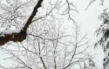 因降雪,济南这些高速收费站临时封闭,所有高速限速80