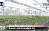 这里是天下泉城 |全国网友云打卡!济南市历城区草莓果含笑!