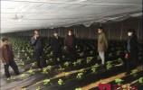 抢春耕 保春种!济南主要种植区的早春瓜菜春播定植3月初完成!