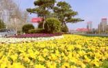 152万余株花卉扮春来!历下区园林中心完成早春布花工作
