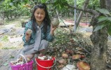 五一假期,藏在济南东部村庄里百果园的大樱桃等您采摘