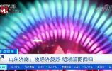 """央视:济南夜经济复苏 """"明湖秀""""靓丽回归"""