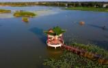 """济南市章丘区白云湖街道:趟出打造""""水乡白云""""加快湿地生态振兴新路子"""