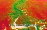 黄河入海丨生态优先绿色发展!山东推动黄河流域生态保护和高质量发展