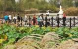 从国庆节免费开放到12月31日!来济西国家湿地公园打卡!