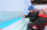 """凤凰黄河大桥3D立体模型首次亮相 惊艳""""十三五""""泉城交通成就展"""