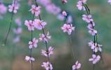 濟南春色美如畫