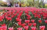 踏青赏花寻春色 芳菲醉美植物园