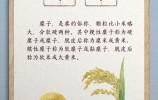 """总书记与陕北老乡聊到的""""糜子""""是啥?"""