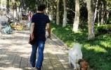 济南养犬管理服务费拟调整:个人养犬初始登记费降为300元/只