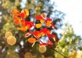 萊蕪這里黃櫨葉漫山紅,最美秋景全看遍!