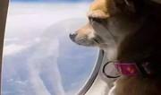 在济南、青岛等九地可实现国内乘坐飞机可以带宠物进机舱了!