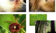 """蜱虫夺命丨济南历城一老人被蜱虫叮咬后身亡,专家提醒:夏季高发,别让蜱虫成了""""夺命虫"""""""