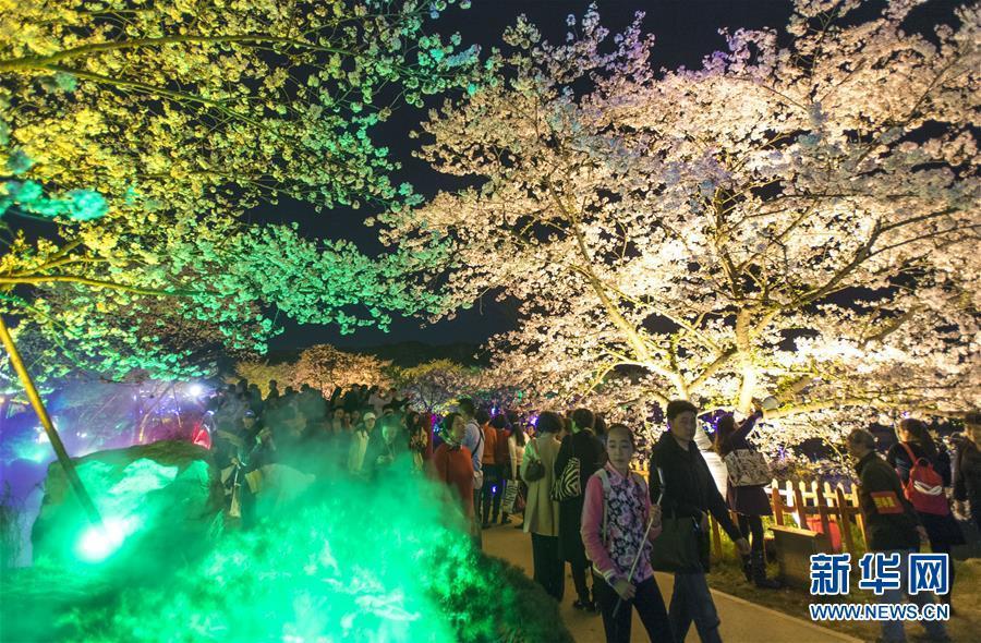 (春季美丽生态)(3)武汉:樱花缤纷醉游人