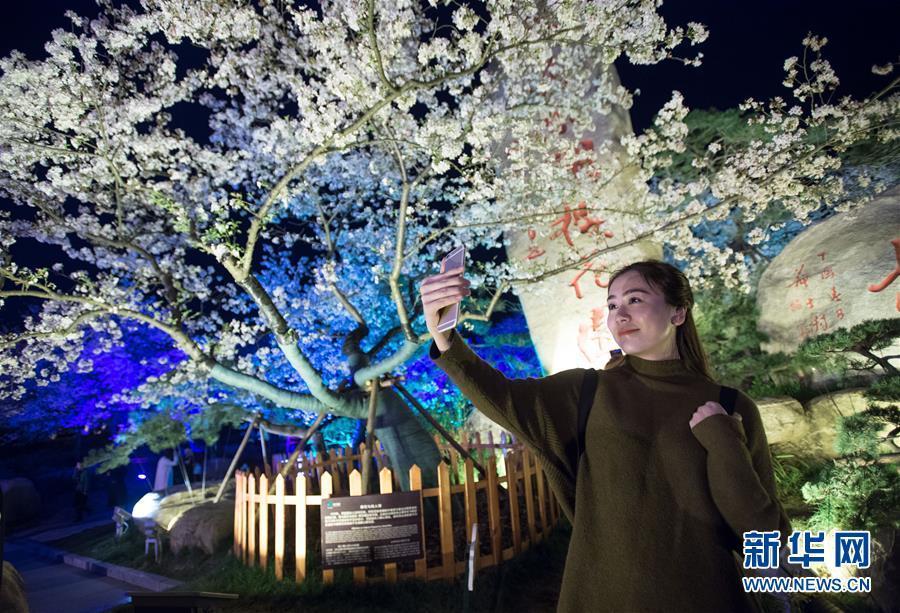(春季美丽生态)(4)武汉:樱花缤纷醉游人