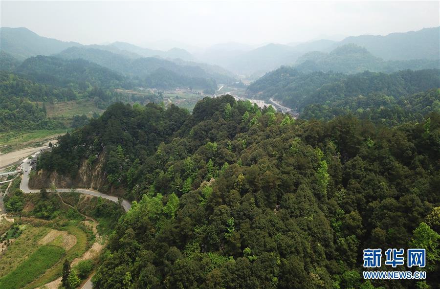 (脱贫攻坚·图文互动)(3)佛顶山:126名生态护林员全部从贫困户中产生