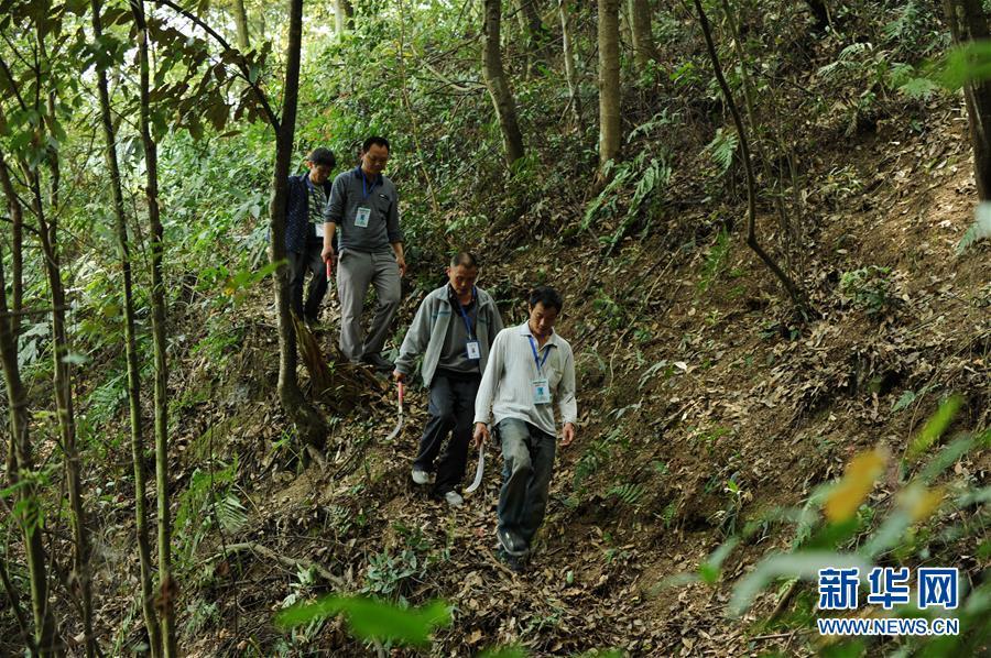 (脱贫攻坚·图文互动)(1)佛顶山:126名生态护林员全部从贫困户中产生