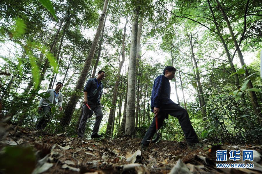 (脱贫攻坚·图文互动)(2)佛顶山:126名生态护林员全部从贫困户中产生