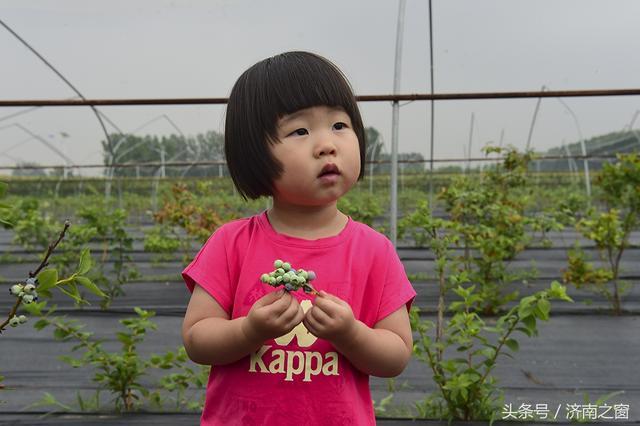 杨松泼 和他的蓝莓人生