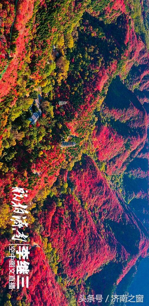 济南进入秋天模式丨红叶谷进入最佳观赏期 俯瞰满山红色热情如火