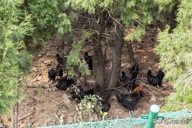 济南有个中国畜牧电商第一人 任春庆