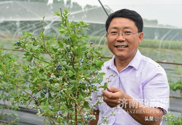 《济南人物》济南市蓝莓种植领头雁 杨松泼
