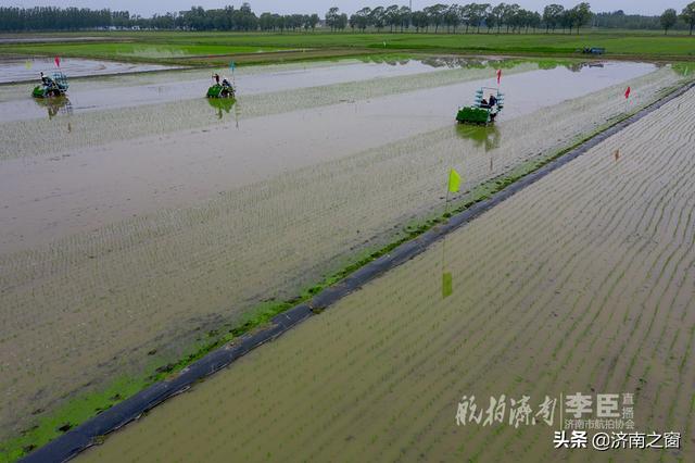济南西部赛江南水乡  千亩机械化插秧场面如耕海