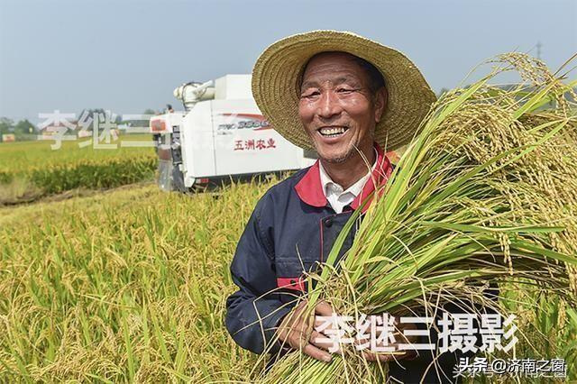 五洲农业30万株向日葵竞相开放 济南西部一片花的海洋