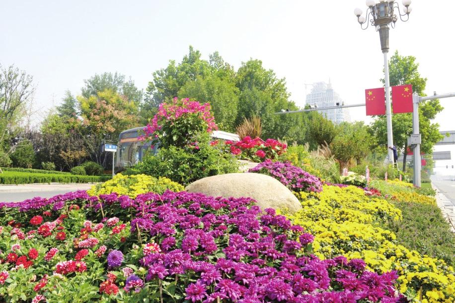 花樣泉城喜迎國慶 千萬盆鮮花扮靚泉城為祖國慶生
