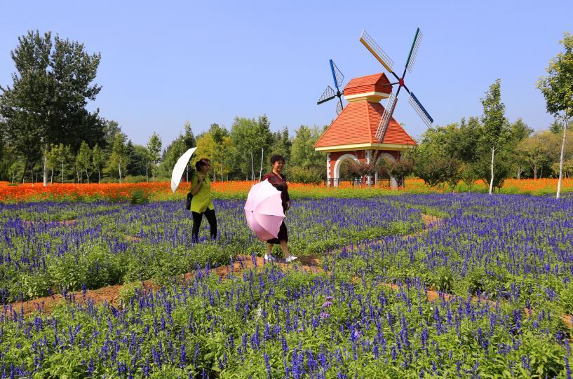 百万鲜花扮靓植物园迎国庆