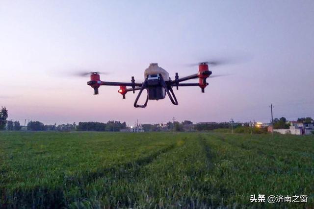 天上降药雨消杀小麦条锈病 山东长清统防统治22.6万亩麦田