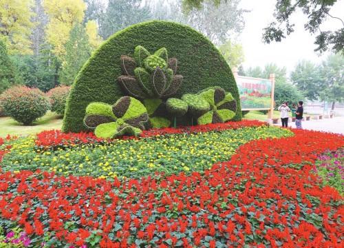 """济南植物园:花团锦簇迎""""双节"""""""