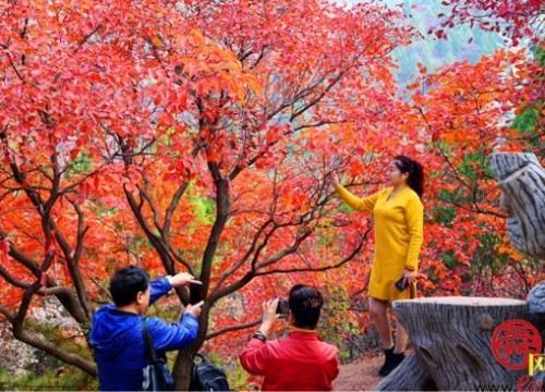 最美高速开通,红叶谷等您来赏秋啦