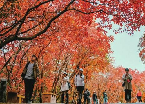 """""""济南的秋天""""有多美手机也能拍大片"""