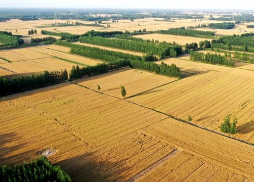 山东5985万亩小麦开镰收割