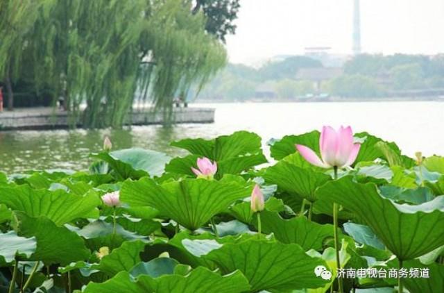 对年轻人来说,一提到大明湖,马上就会想到一个人物,大明湖畔的夏雨荷.