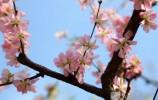 """围观济南 已是""""人间三月天"""" 花都开好了还不约起来?"""